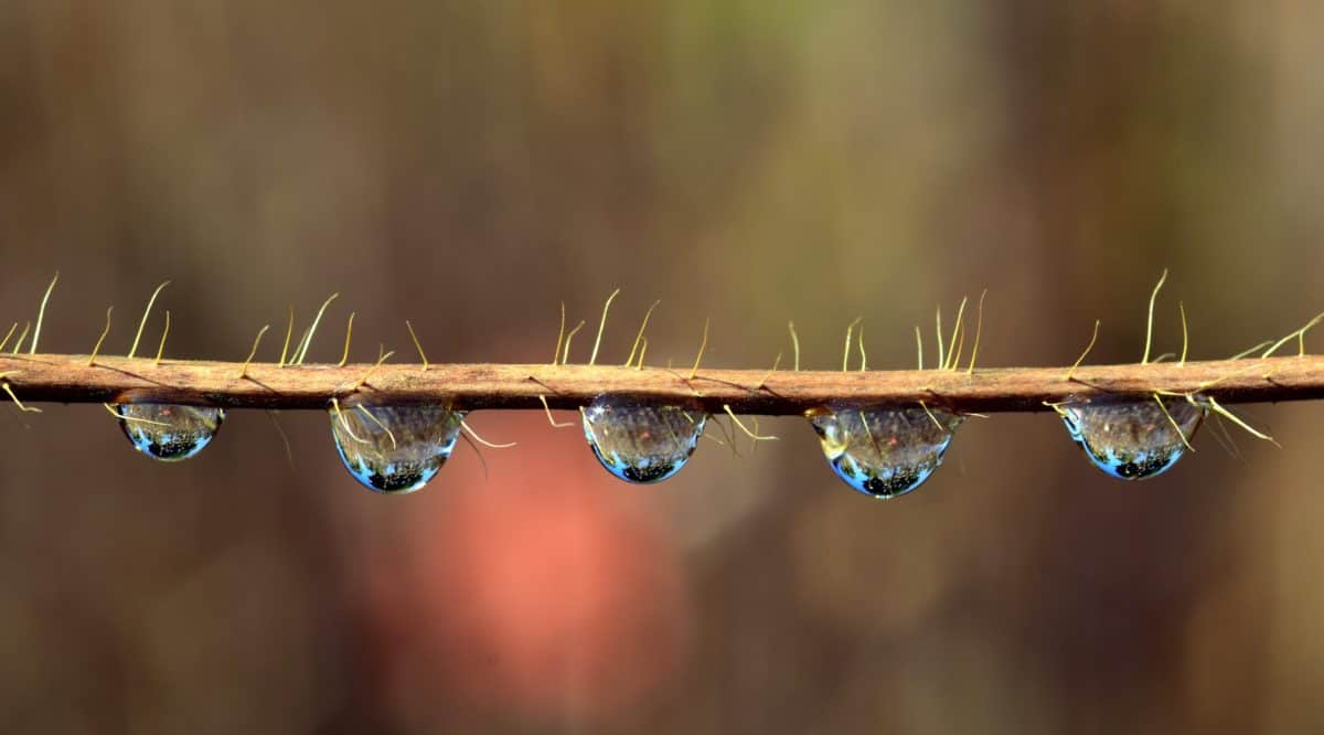 dew, rain, macro, reflection, branch, water, nature