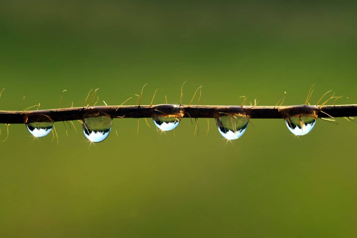 rain, moisture, macro, dew, water, nature, reflection, branch