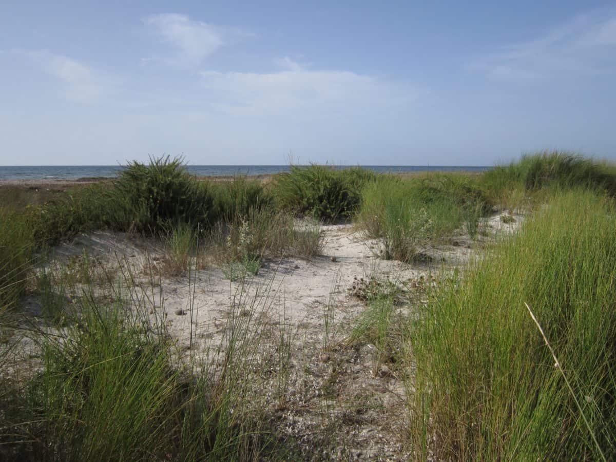 Foto gratis paesaggio mare spiaggia natura erba cielo - Tappeto di giunchi ...