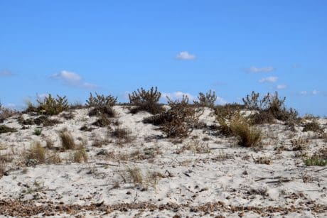 sky, dry, nature, landscape, sand, plant, outdoor