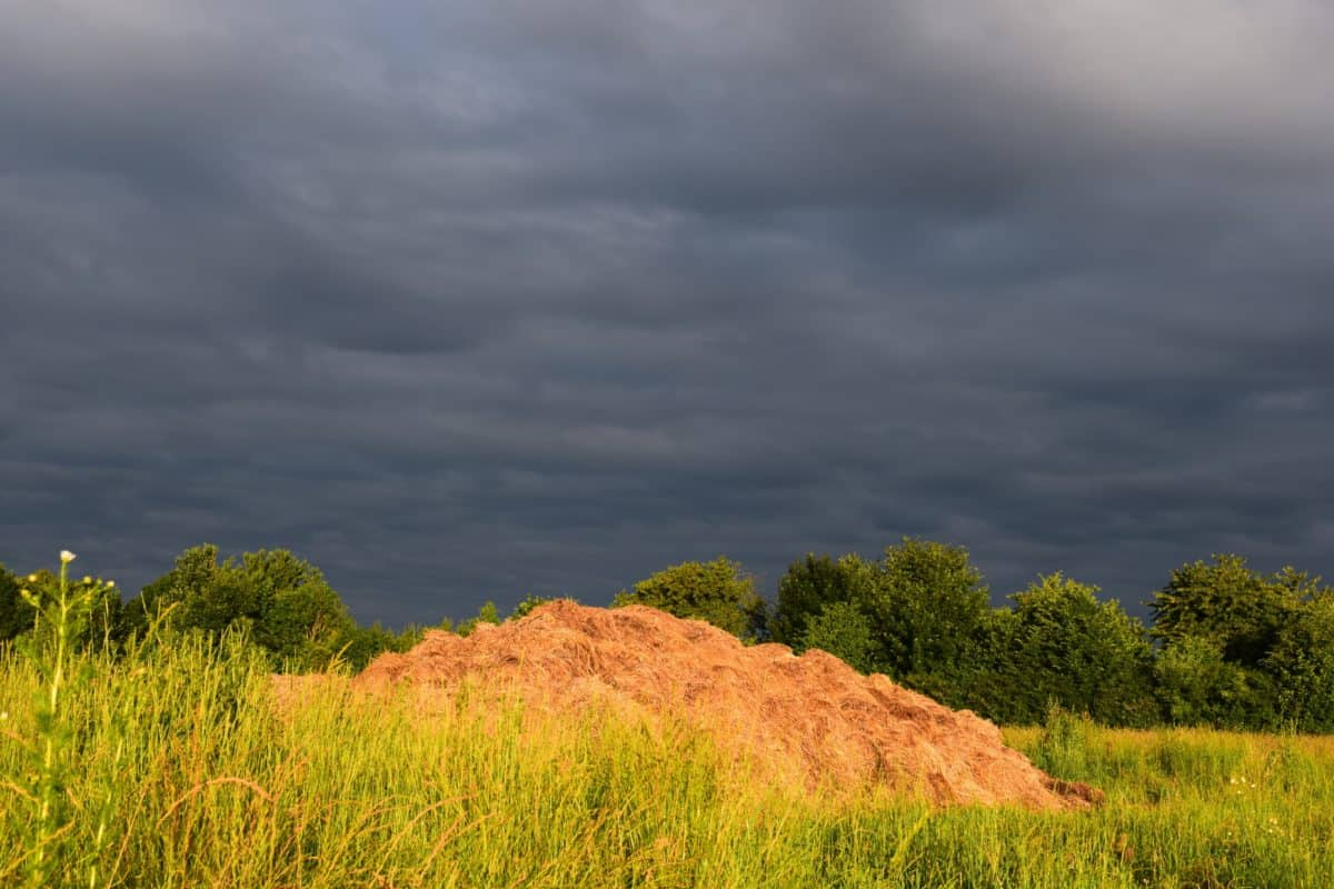 nature, grass, landscape, sky, cloudy, storm, field, plant, meadow