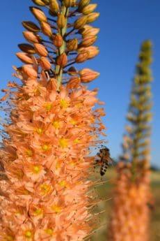 ฤดูร้อน ดอกไม้ ฟลอรา ธรรมชาติ พืช ผึ้ง แมลง