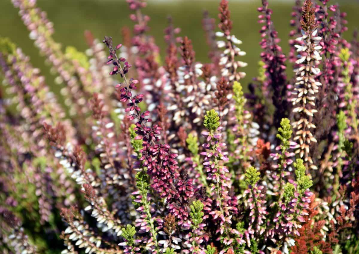 l'été, fleurs sauvages, flore, nature, feuilles, sauvage, jardin, plante, plante