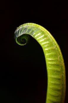 dettaglio, flora, macro, natura, verde foglia, tenebre