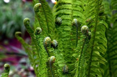 fern, macro, garden, flora, plant, environment, leaf, nature, forest