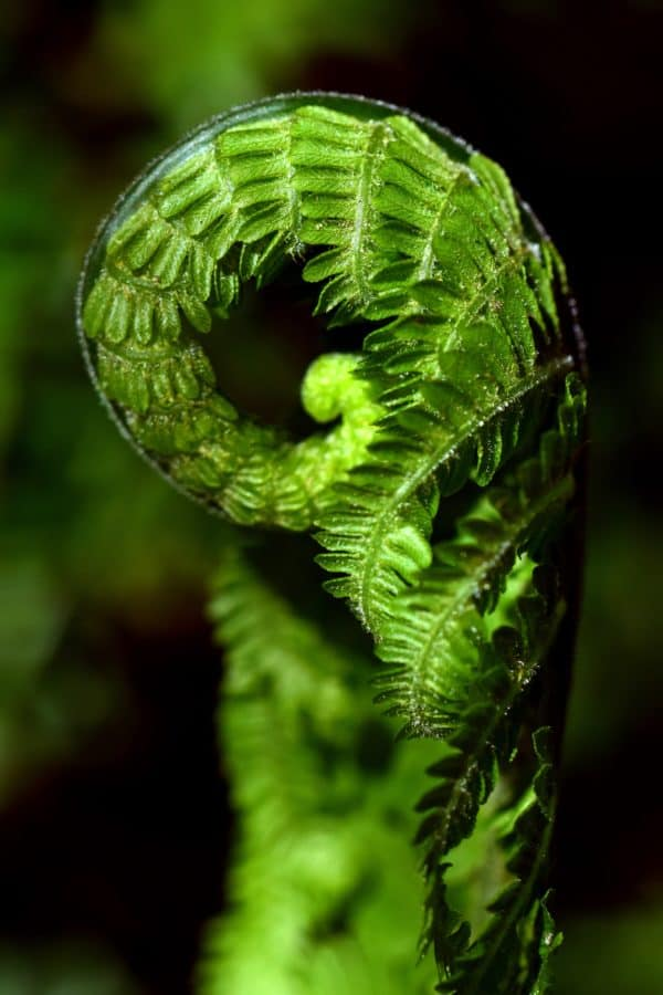 helecho, jardín, flora, planta, hoja verde, naturaleza, macro, detalle