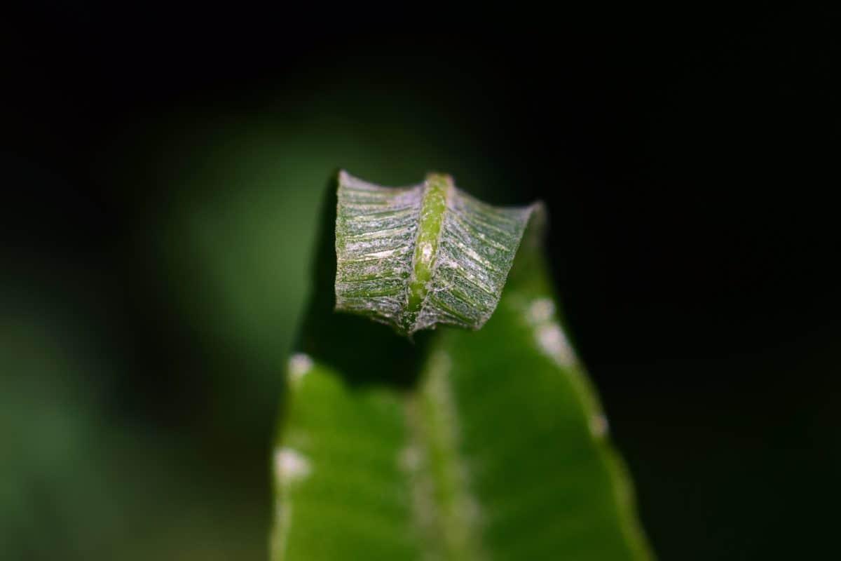 hoja verde, naturaleza, flora, plantas, macro, luz, sombra