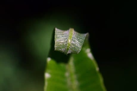 green leaf, nature, flora, plant, macro, daylight, shadow