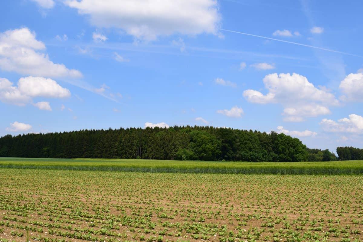 nature, paysage, paysage, arbre, champ, ciel, agriculture