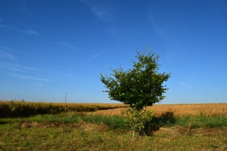 landscape, tree, nature, sky, grass, field, meadow, blue sky