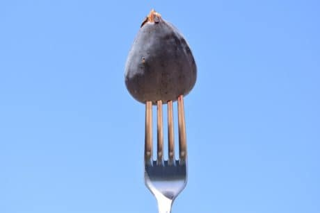 fork, metal, fig, fruit, food