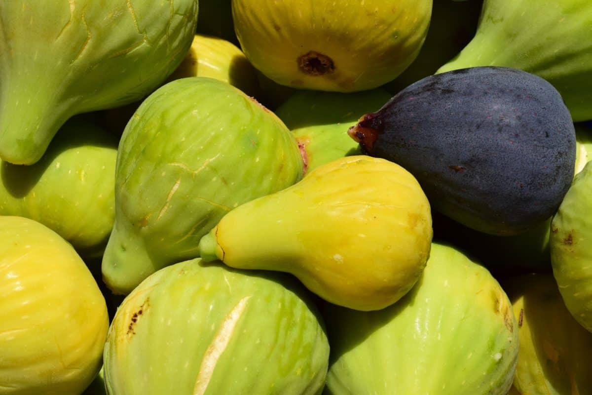 fruits, nature, nutrition, alimentation, figue, organique