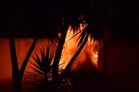 smoke, wildfire, bonfire, heat, palm tree, night, dark