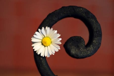 daisy, flower, herb, plant, blossom, petal, metal, art, decoration