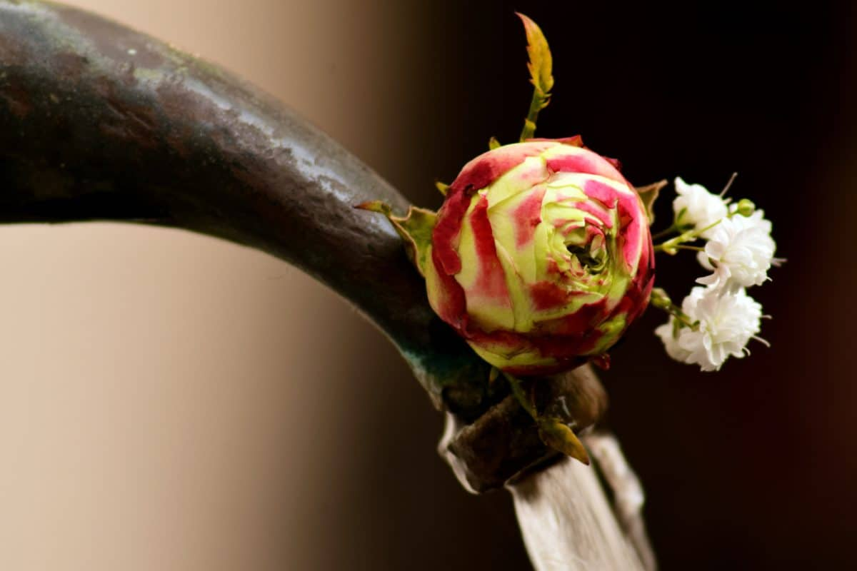 flower, rose, arrangement, metal, reflection, bronze