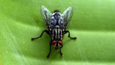 natura, macro, insetto, insetto, invertebrati marini, animale, verde foglia