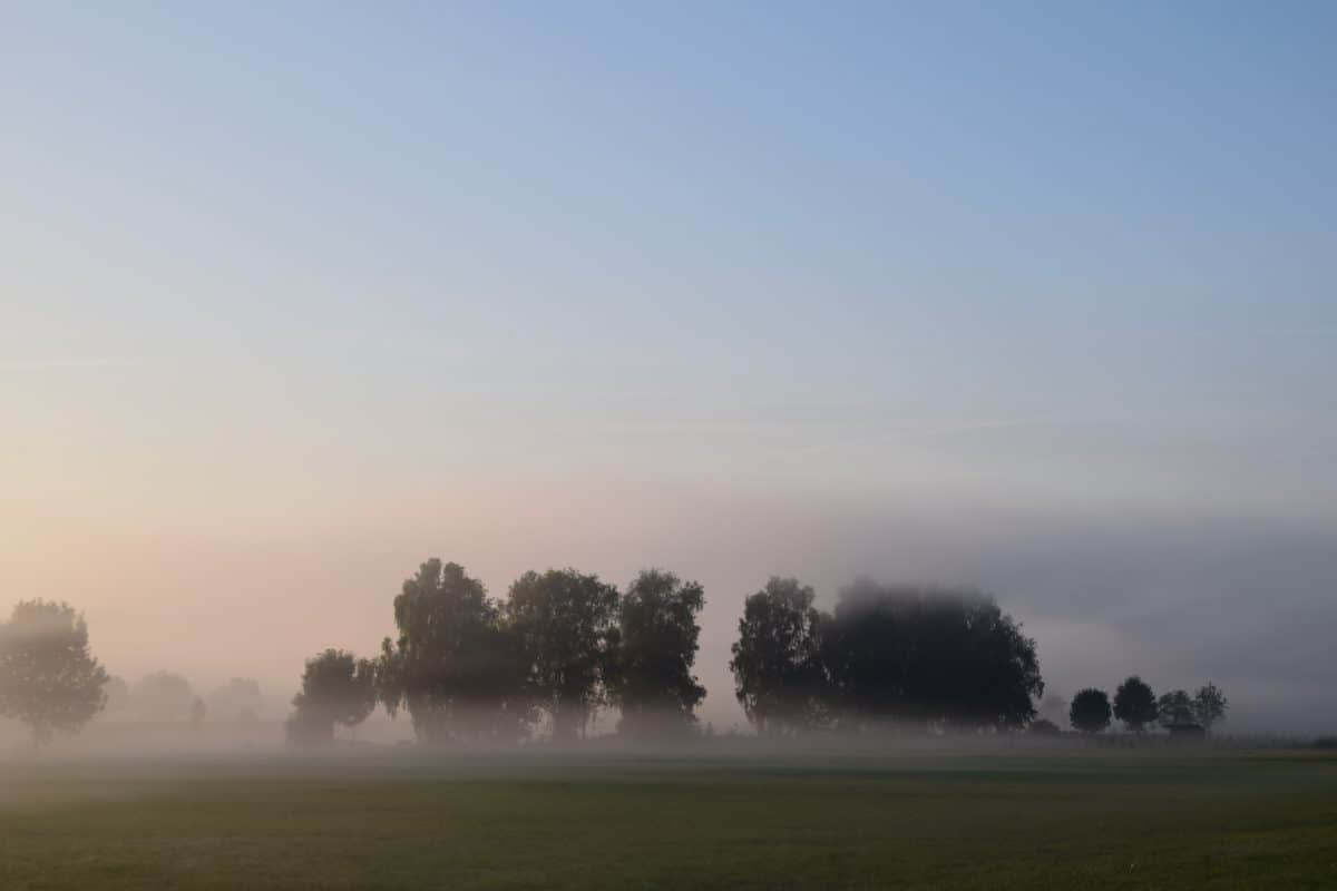mist, sun, landscape, dawn, fog, sky, nature, sunset, tree
