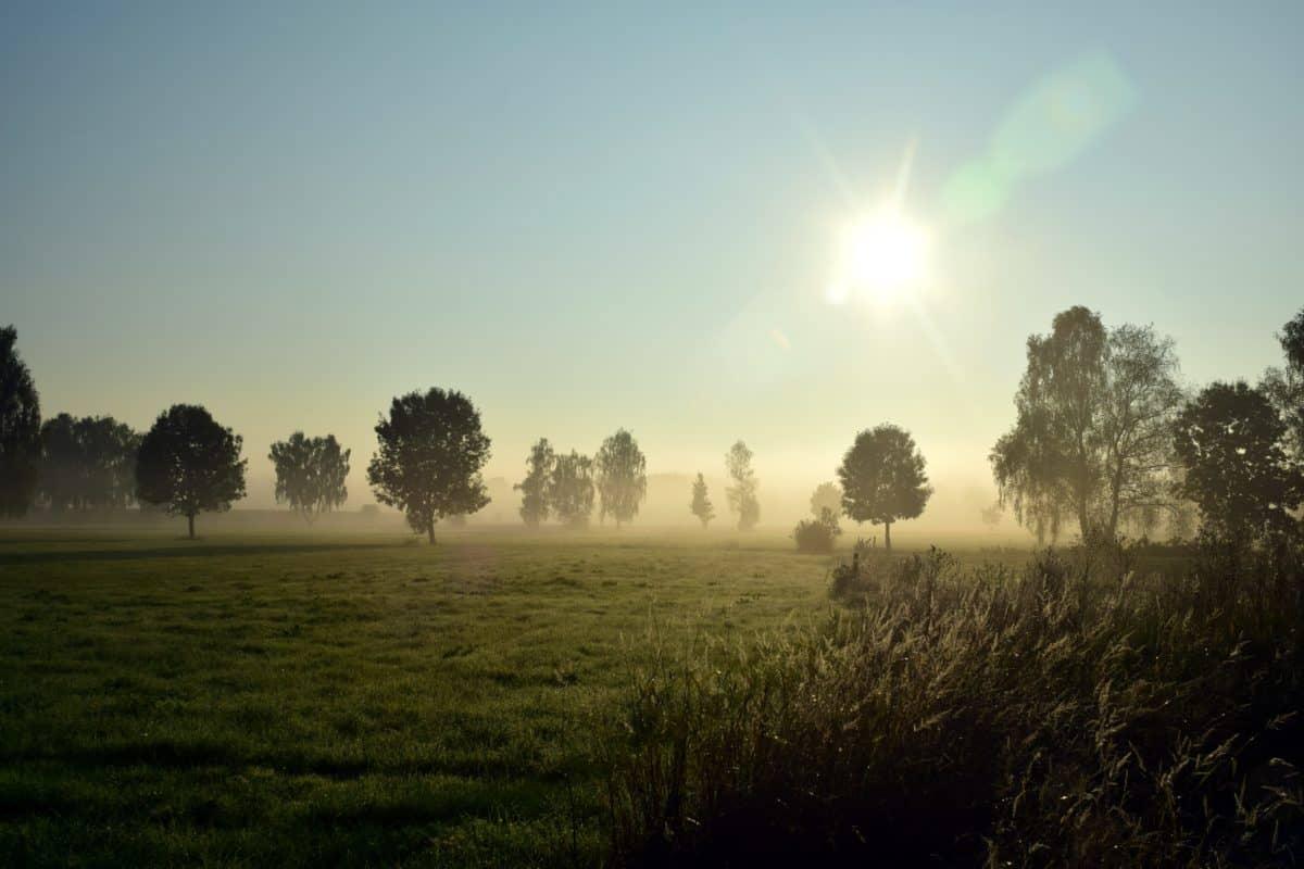 brouillard, arbre, coucher de soleil, soleil, météorologie, paysage, ciel, atmosphère