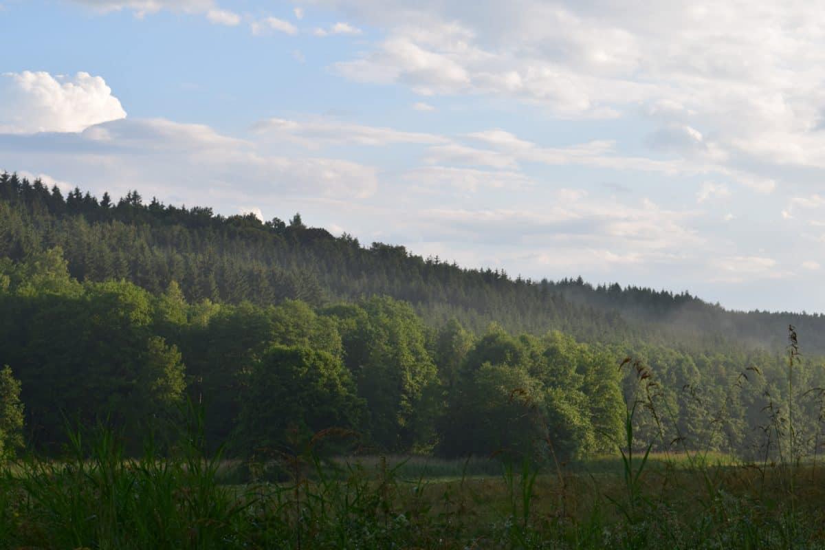 ciel bleu, plein air, paysage, montagne, brouillard, nature, bois, arbre, forêt