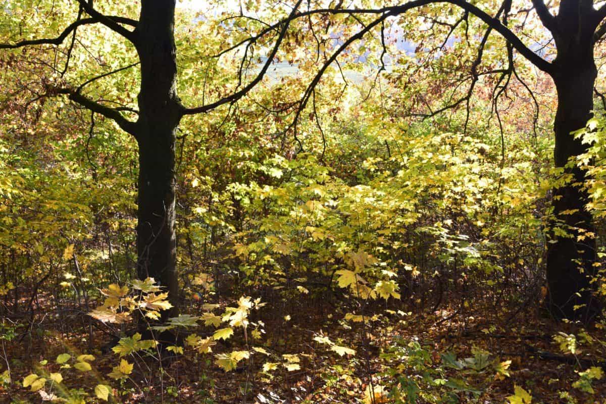 legno, albero, foglia, natura, paesaggio, pianta, autunno, foresta