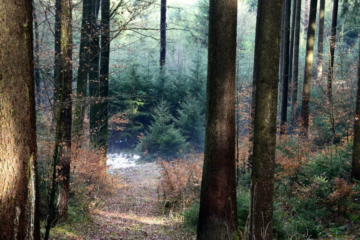 hoja, madera, niebla, amanecer, naturaleza, árbol, paisaje, bosque