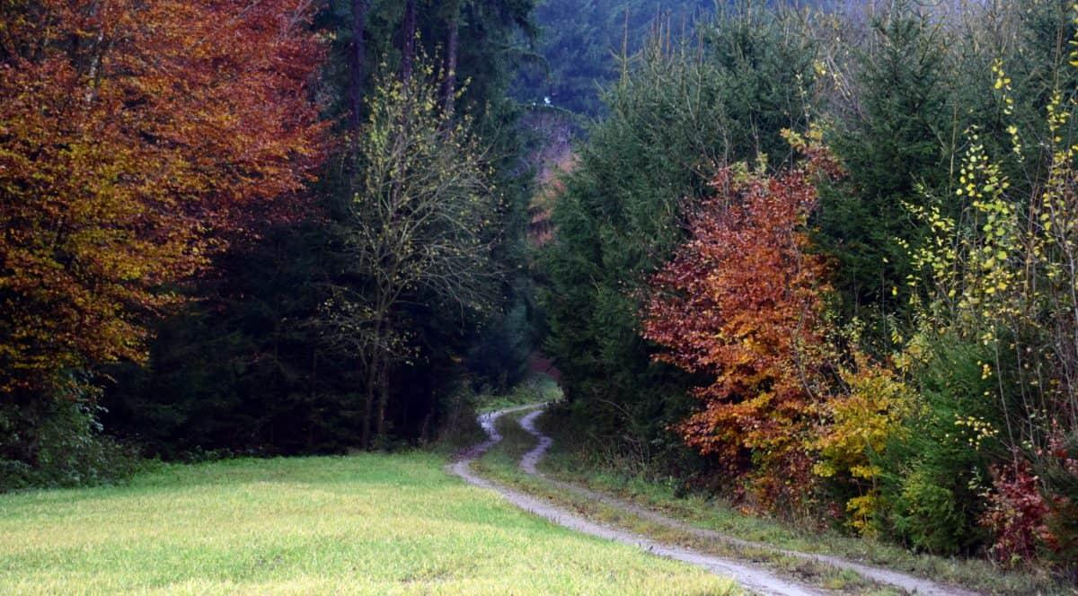 legno, natura, albero, foglia, paesaggio, autunno, bosco, pianta