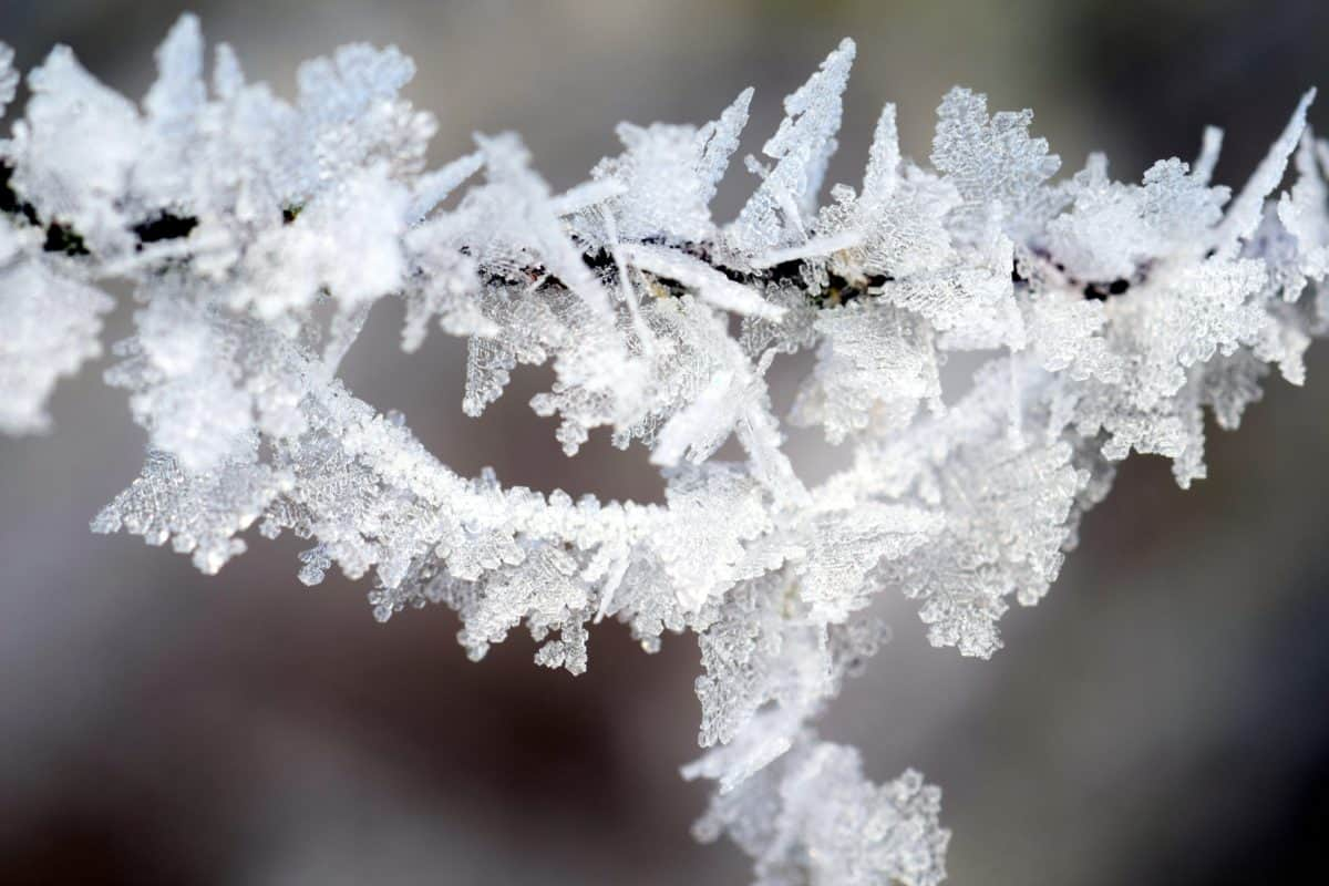 winter, snowflake, macro, crystal, frost, branch, nature, snow