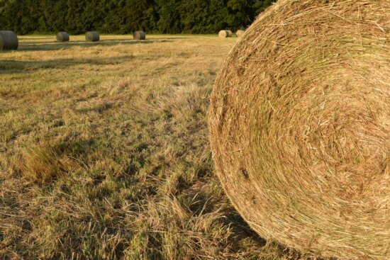 paysage, agriculture, campagne, herbe, paille, nature