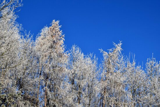 landscape, wood, snow, frost, tree, blue sky, cold, nature, winter