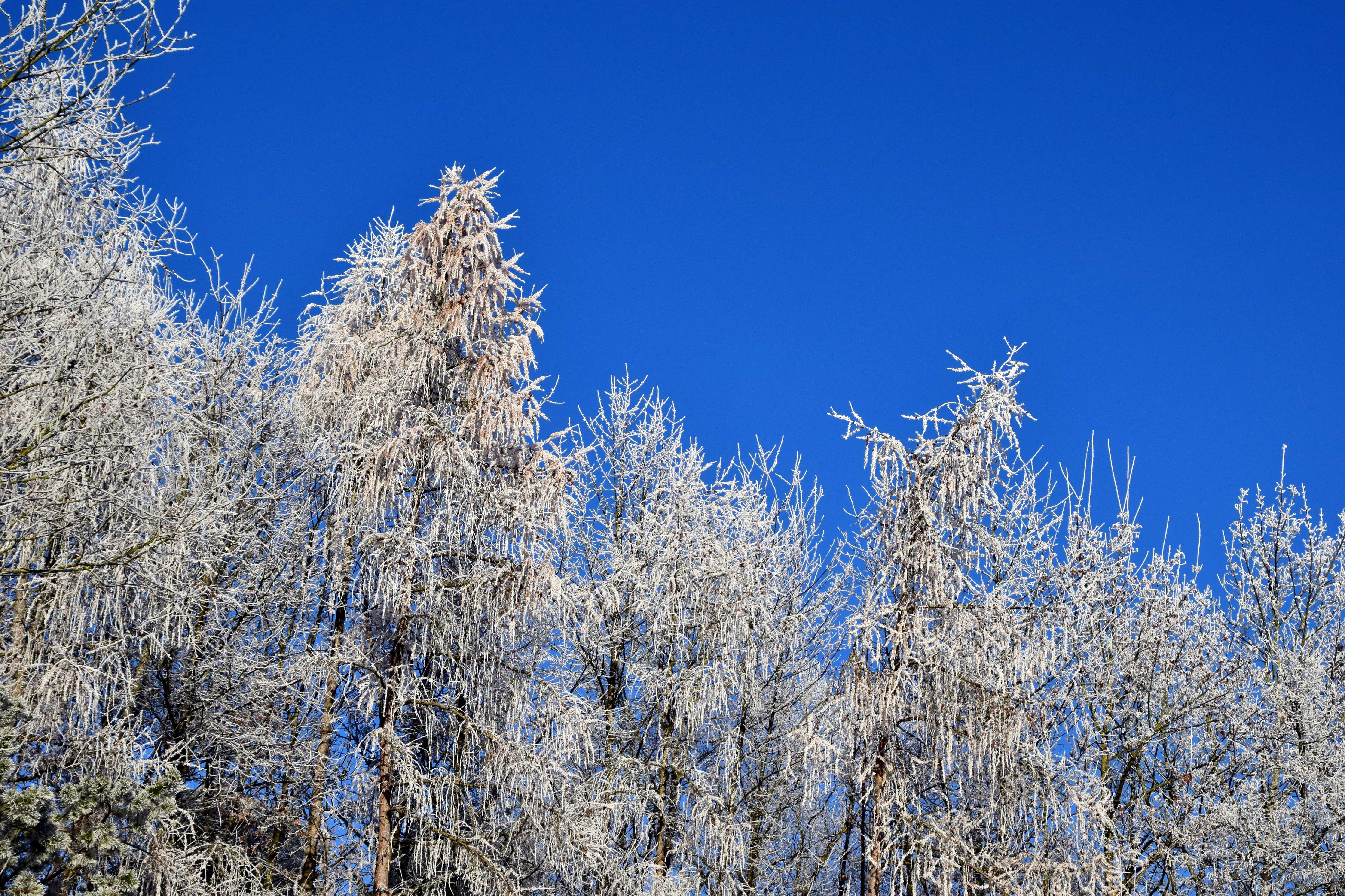 paysage bois neige gel arbre ciel bleu froid nature hiver - Arbre Ciel
