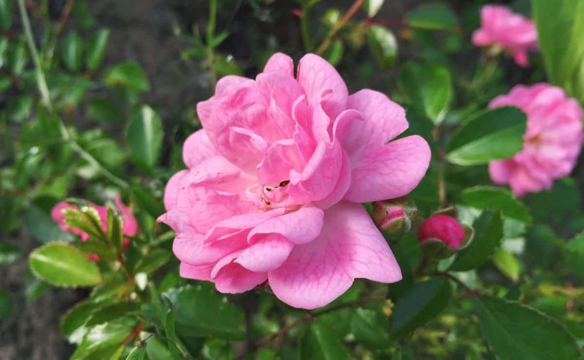 jardin, flore, feuille, pétale, nature, été, fleurs, horticulture