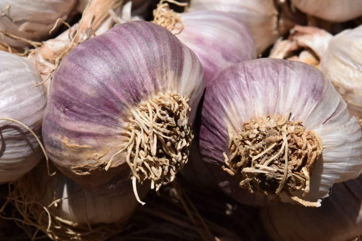 spice, food, vegetable, garlic, onion, stalk, macro