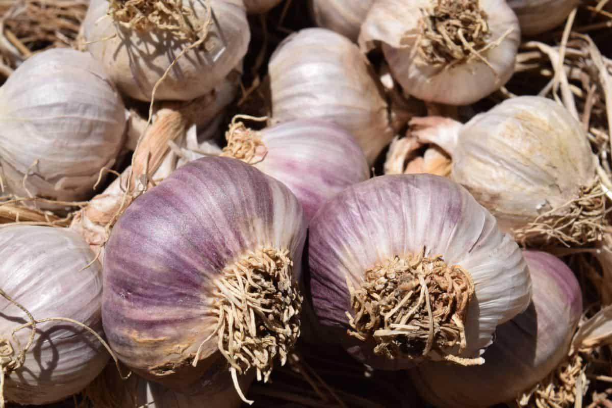 Gemüse, Lebensmittel, Knoblauch, Gewürz, Wurzel, Zwiebel, Makro