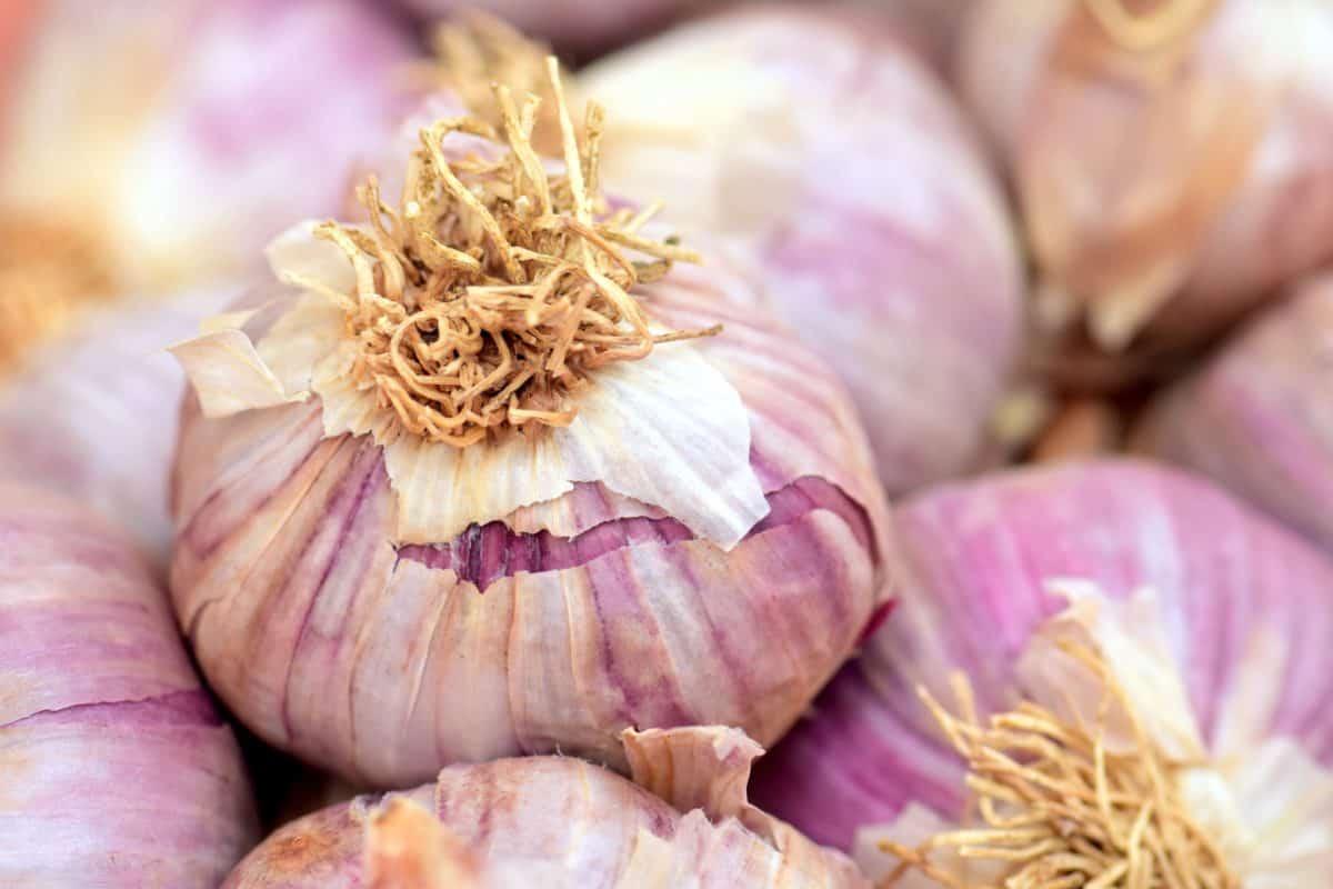 spezie, verdura, aglio, radice, cibo, cipolla, macro