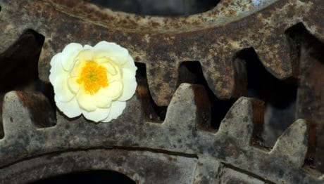 corrosion, mechanism, rust, flower, plant, steel, iron, old, industry
