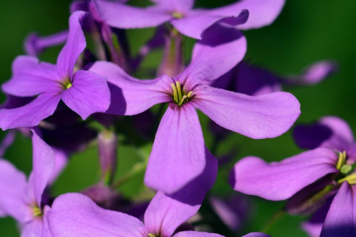 horticulture, jardin, été, fleur, flore, nature, plante, plante