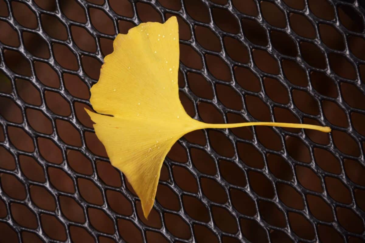 leaf, wire, metal, fence, daylight, autumn, plant