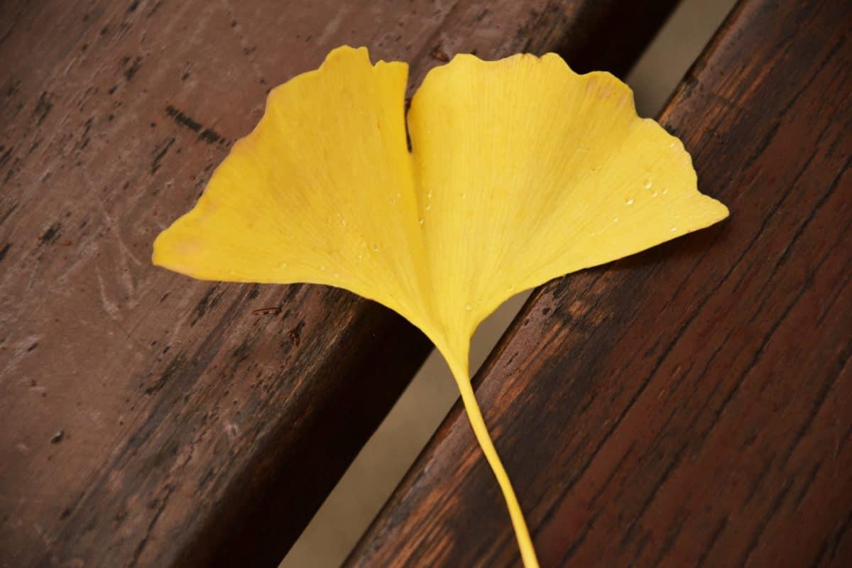 feuille, lumière du jour, jaune, bois, table, automne, plante