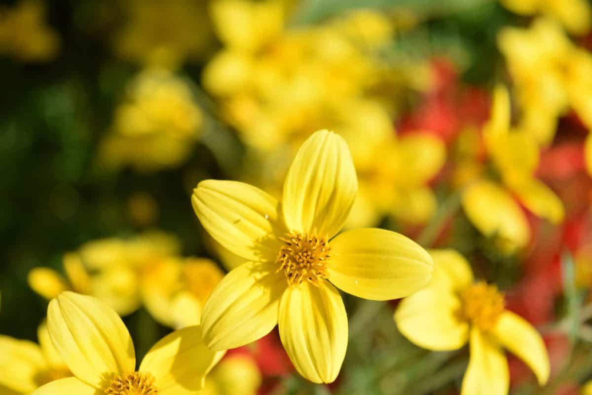 Flora, natura, foglia, giardino, fiori, estate, pianta