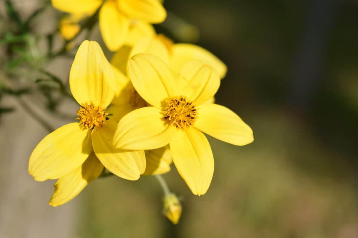 summer, flora, flower, leaf, nature, plant, garden, herb