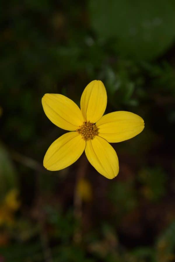 natura, fiore, estate, flora, piante, giardino, erba