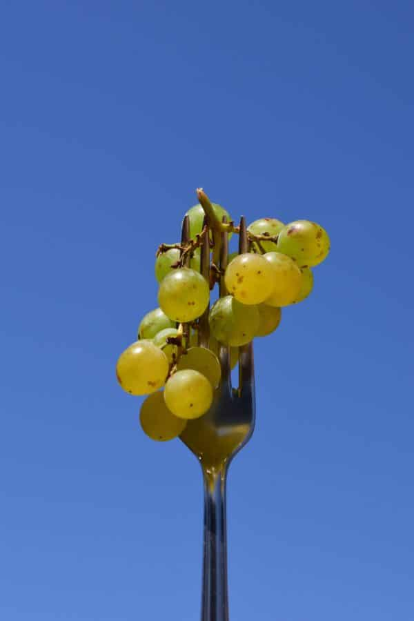 fork, sky, fruit, organic, food, vineyard