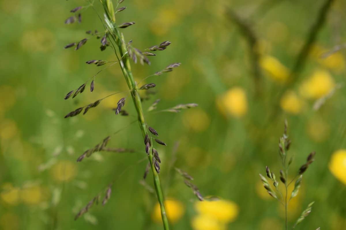 summer, nature, green grass, flora, leaf, plant