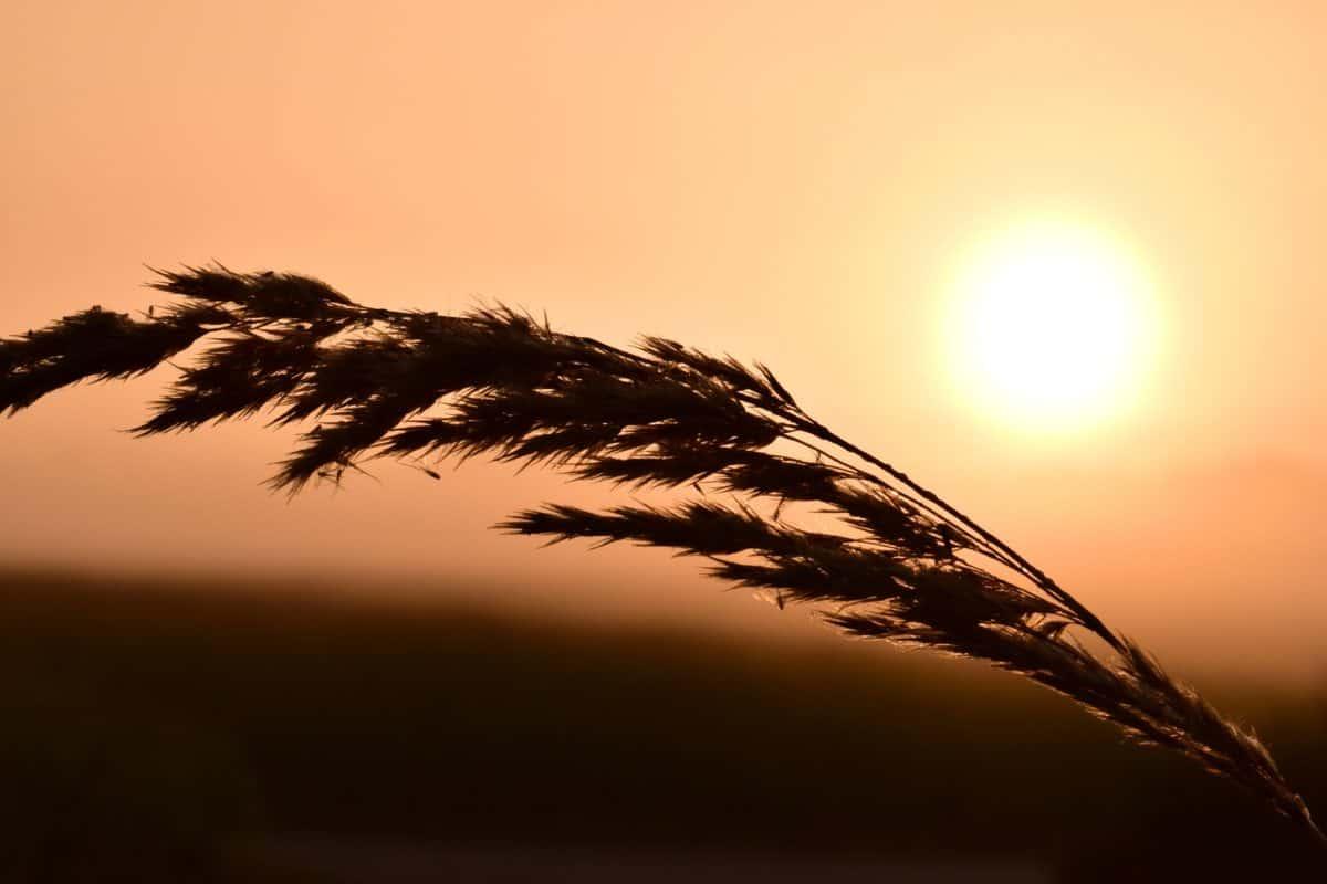 sky, dusk, silhouette, shadow, landscape, sunset, dusk, plant