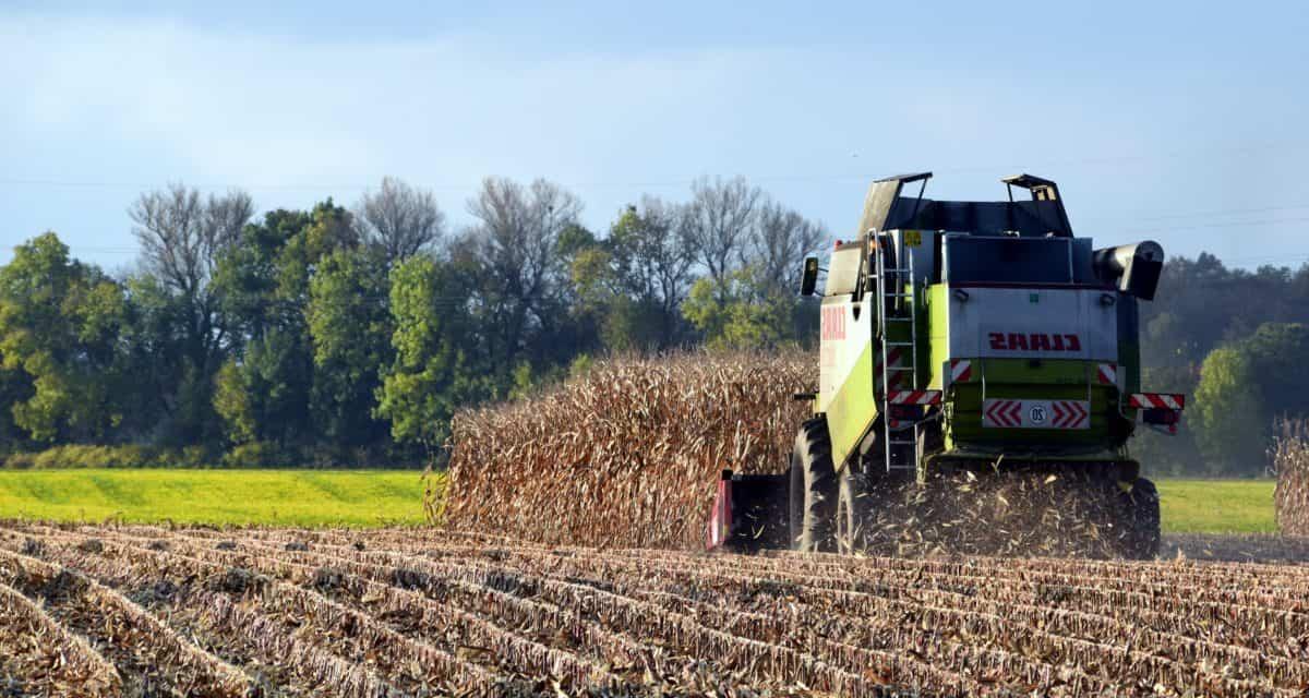 paesaggio, agricoltura, suolo, agricoltura, campo, campagna