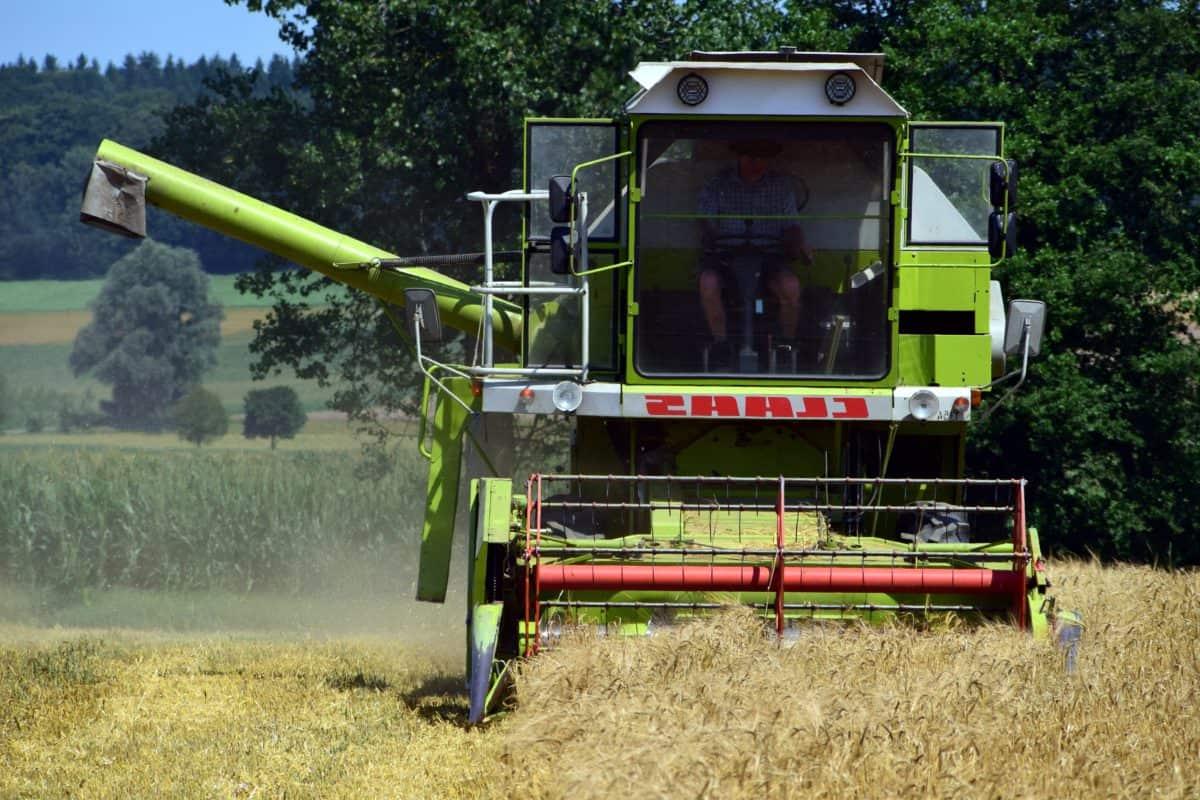 domaine, l'agriculture, véhicule, machine, récolte, grain, arbre