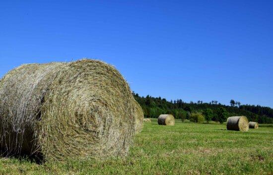 l'agriculture, herbe verte, campagne, paysage, botte de foin, paille