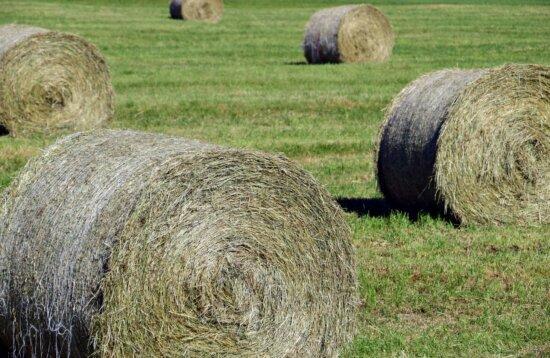 l'été, paille, herbe, agriculture, champ, nourriture, paysage, campagne