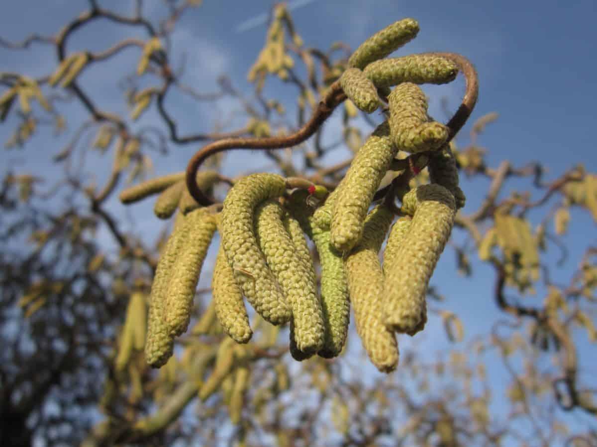 oddział, flora, niebo, natura, drzewo, nasion