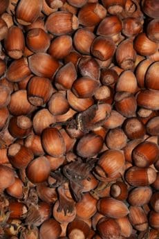 Lebensmittel, Holz, Samen, Haselnuss, braun, Makro, detail